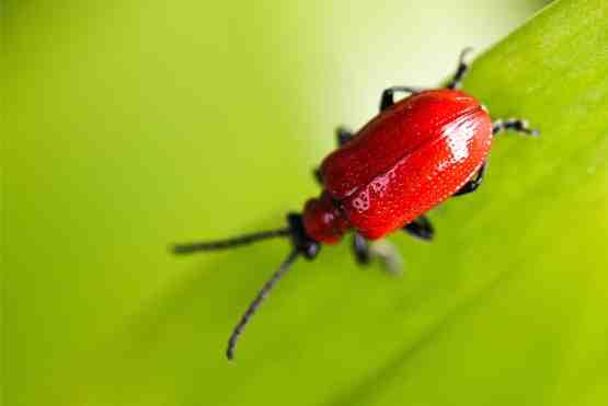 böcek ve haşere ilaçlama
